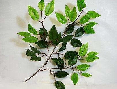 ficus-leaf-stem