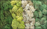 My Favorite Mosses I LOVE to Use